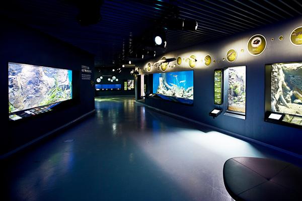 anmark 蓝色星球水族馆 对于年龄偏小,无法参与浮潜的小朋友而言,想要领略神秘的海底风光,海洋馆无疑是最好的体验场所。作为北欧规模最大、海底生物种类最多的海洋馆,丹麦蓝色星球水族馆不仅在建筑外观上具有前卫、独一无二的设计,整个空间布局也如水所呈现的漩涡般将你卷入深蓝色的神秘海底世界。
